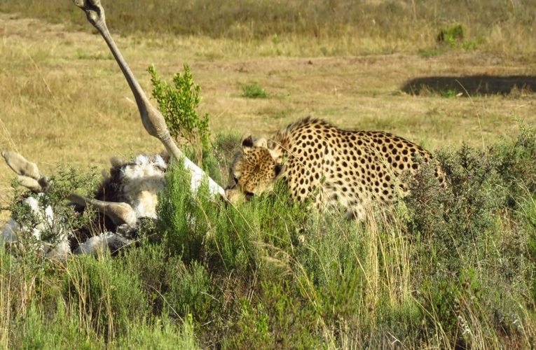 Travel Tuesday – Live from the Garden Route Game Lodge