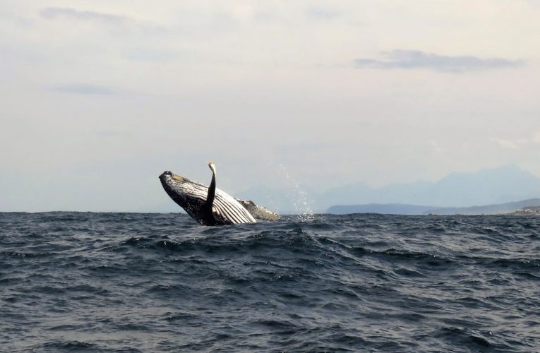 Travel Tuesday: Whale Watching along the Garden Route